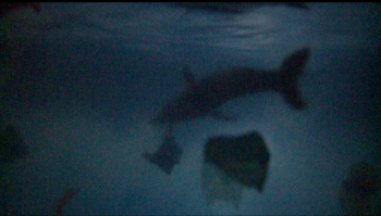 dolphin in night water